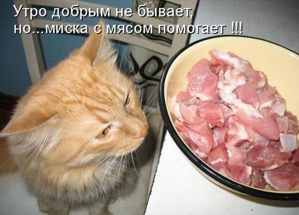 стала первым что быват с мясом узнать, как купить