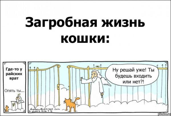 Загробная жизнь кошки