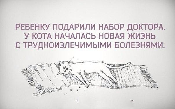 Новая жизнь кота